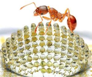camara-hormiga--644x544